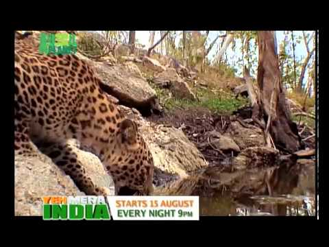 Ye mera india 2 nd song animal planet