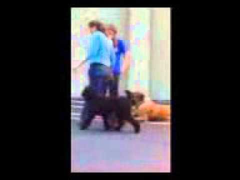 JCM's Dog Training - Basic 8 week course - Off Leash