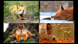 видео Мы и природа