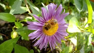 Красота природы села Лазо Лазовского района