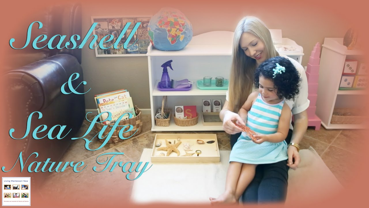 Seashell & Sea Life Nature Tray: How to Teach Vocabulary Using the 3-Period Lesson