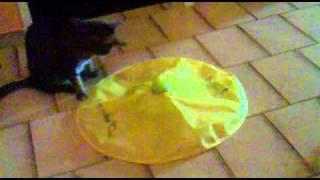 Katzen spielen Catch the mouse - Fang die Maus