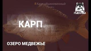 RF4 РР4 Русская Рыбалка 4 Озере Медвежье Карп на ДОНКИ