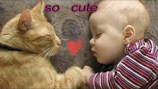 قطط رائعة تلعب مع الأطفال مقاطع جد مضحكة     cats play with children very funny clips