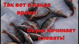В какое время по весне окунь начинает клевать Рыбалка на реке Томь Окунь на безмотылку
