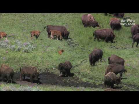 Национальный парк Йеллоустоун, США. Yellowstone National Park #1