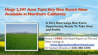 Rice Farm Land for sale- Duck Hunting Land for sale California
