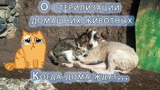 Стерилизация домашних животных. Когда дома ждут...