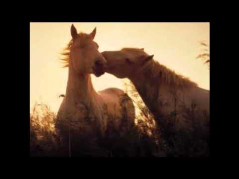 Horse Neigh Sound Effect