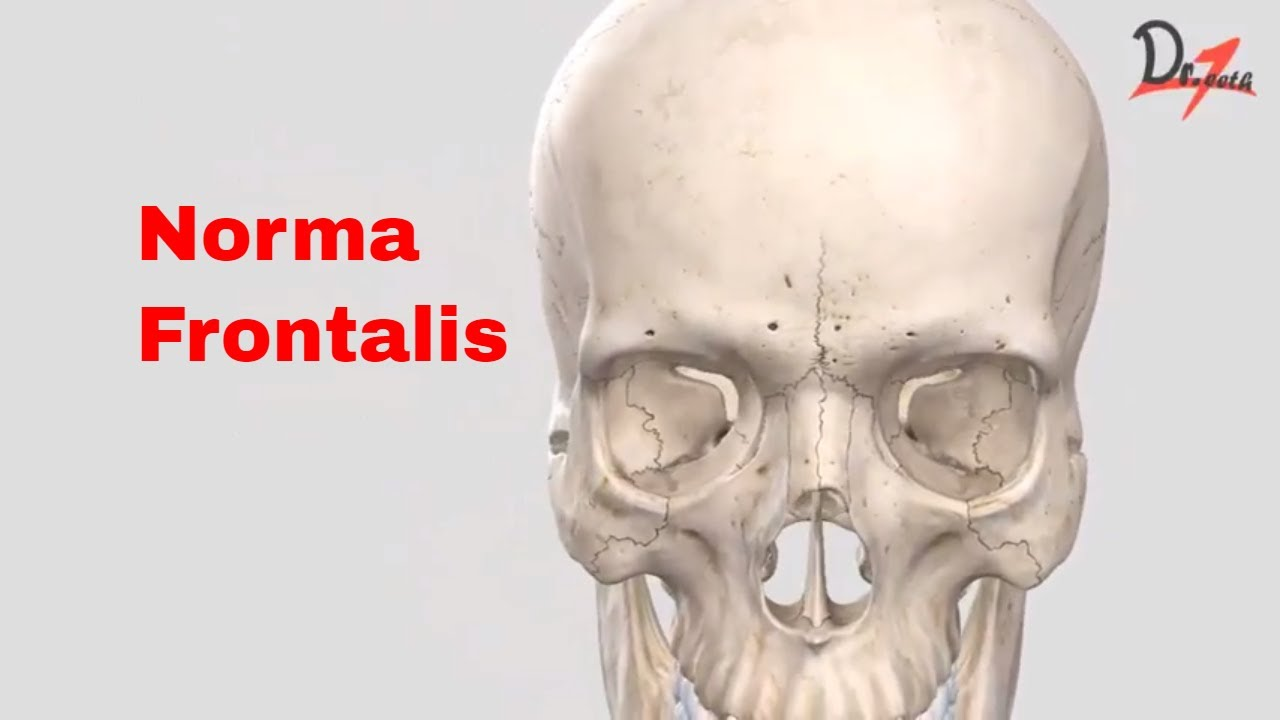 Norma Frontalis Youtube