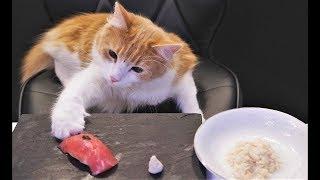 СМЕШНЫЕ КОТЫ Видео для детей Домашние животные - Свежие приколы (2019) МатроскинТВ