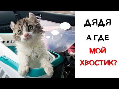 Женщине принесли бесхвостого котёнка за 5 марта