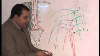 Lumbar Plexus DR.Abdo Al Sharkawy