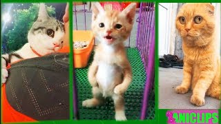 Epic Funny Cats / Cute Cats Compilation - It's Time for Super LAUGH!