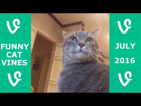 Funny Cats Vine Compilation July 2016 - Best Vine Videos