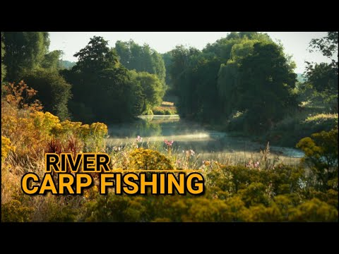 **RIVER CARP FISHING** ꟾ First Time On The River Medway ꟾ 2020