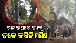 Koraput: People Scared As Bear Spotted Atop Tree