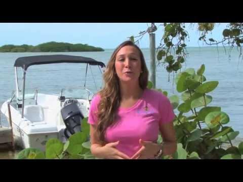 Beaver goes Scalloping plus St. Pete Beach Hangoutиз YouTube · Длительность: 2 мин32 с