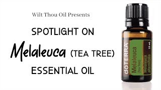 Spotlight on doTERRA's Melaleuca / Tea Tree Essential Oil
