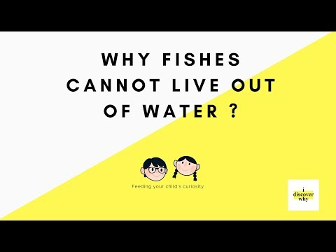 Why Fishes Cannot Live Out Of Water I How Fish Breathes I Educational Videos For Kids I Science