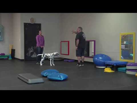 how-to-train-your-dog-to-stop-leash-pulling,-stop-barking,-and-stop-jumping!