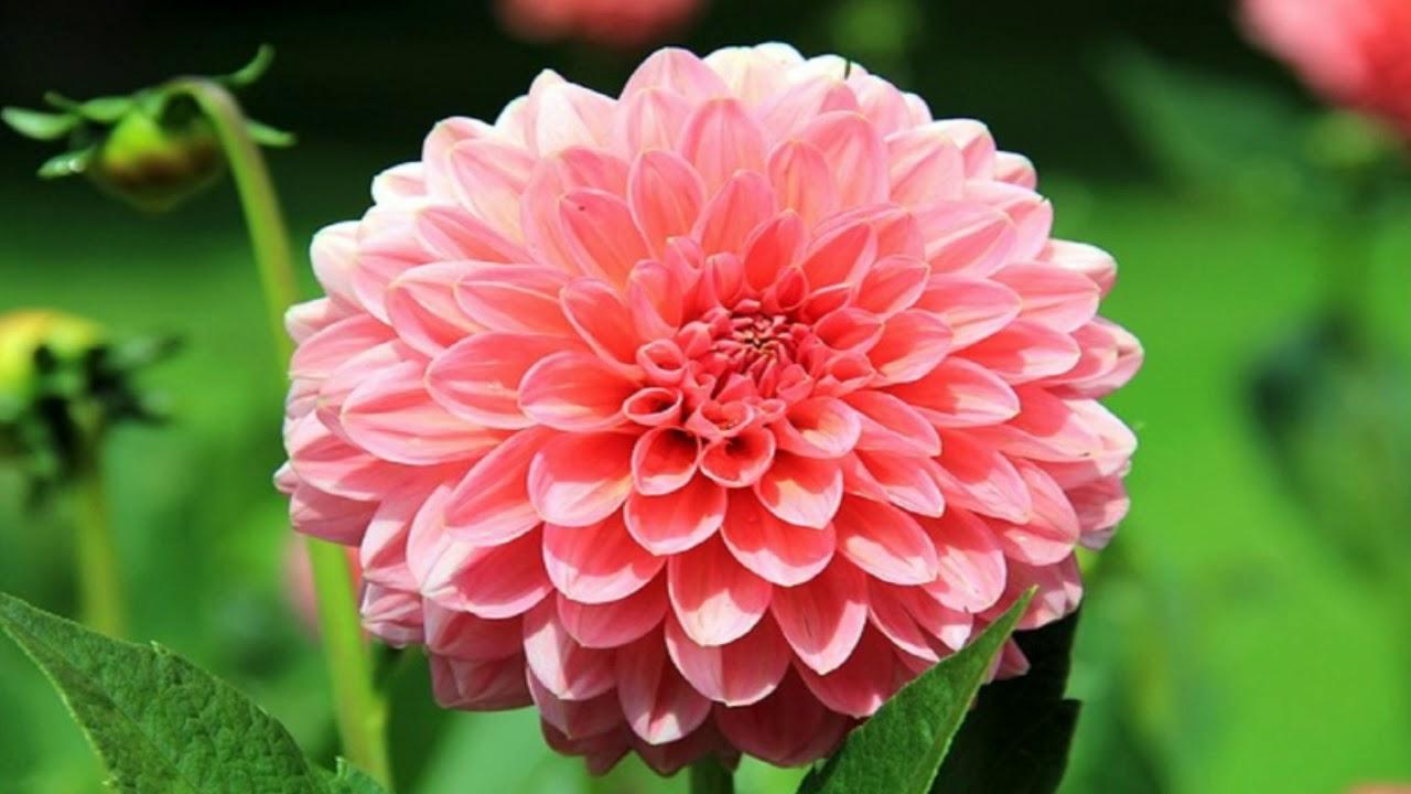 World Beautiful Flowers Wallpaper Youtube
