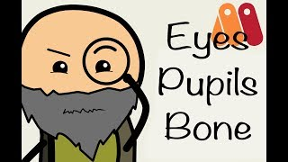 How To Make Animation and rigging Eyes / Pupils Using Bones in Anime Studio Pro 10/11 (Moho 12)