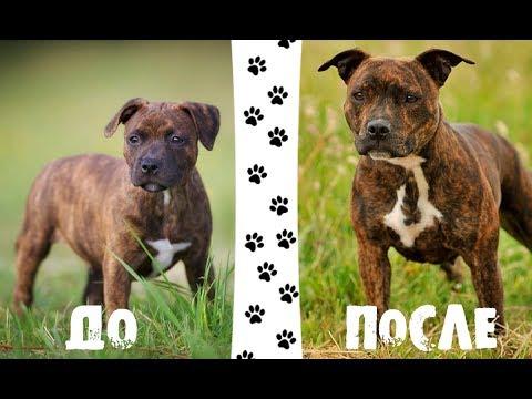 Собаки До и После - Видео онлайн