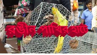 garia bird market | পাখির হাট  | Bird market | rural রঙ্গিন পাখির বাজার |