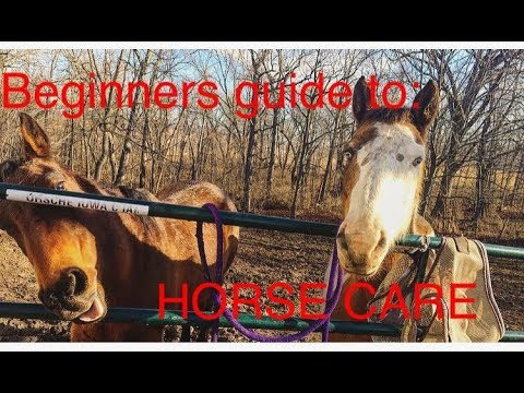 how to care horse