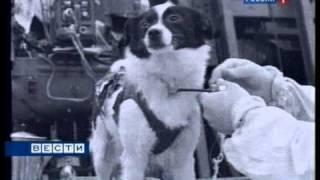 Белка и Стрелка покорили Космос(50 лет назад совершен первый удачный полет животных в Космос., 2010-08-19T12:03:35.000Z)