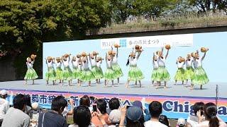 2015-5-3 茅ヶ崎で行なわれた「春の市民祭り」のステージイベントの一コ...