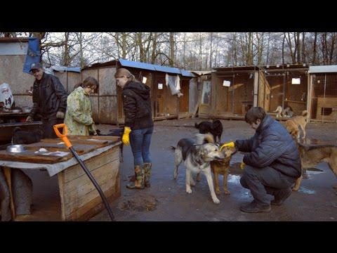 ⁂❁Новый ковчег. Помощь бездомным животным.❁⁂