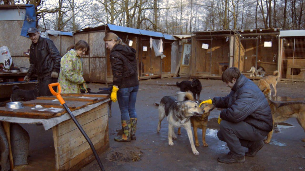 фото помощь бездомным