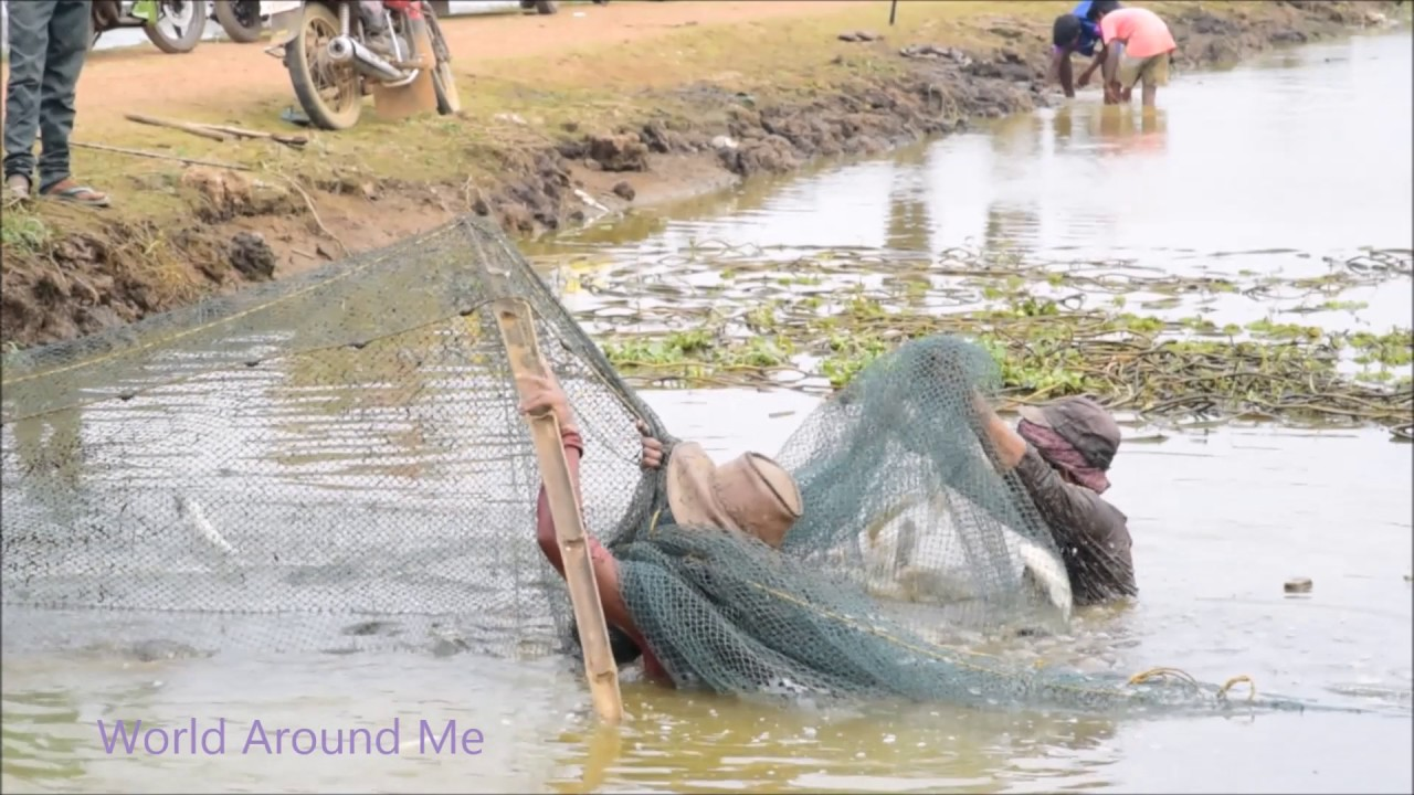 how to catch rohu fish