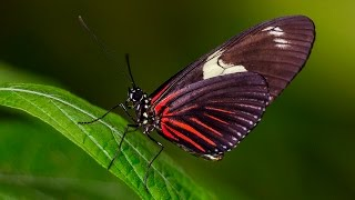 Butterfly Jungle Flutters Back to the San Diego Zoo Safari Park