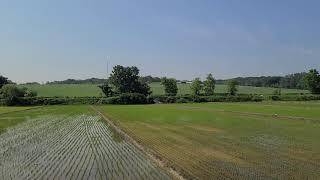 모내기를 끝낸 농촌풍경