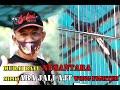 Murai Batu Bertenaga Kuda Nusantara Milik Aba Jali Ajt Wong Fighter Team  Mp3 - Mp4 Download