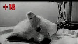 Фильм - Оживление головы собаки эксперимент + 18 (English film)