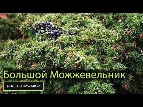 Можжевельник в ландшафтном дизайне, фото и виды
