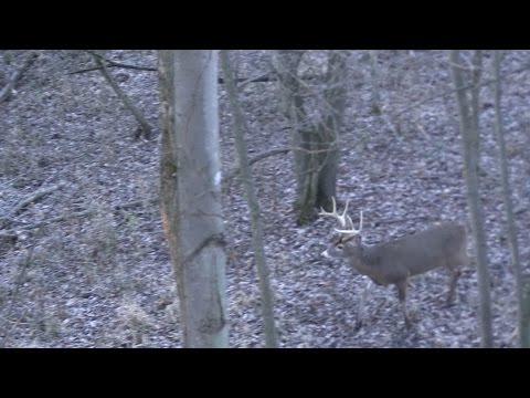Michigan Deer Hunting Action Is Hot
