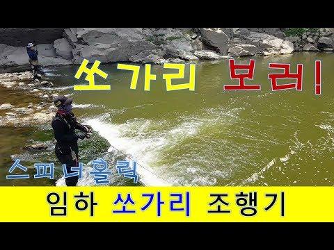 임하권 쏘가리 탐색 [스피너홀릭]루어낚시