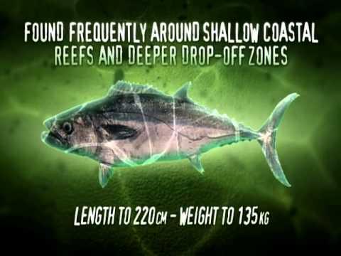 iFish Series 7 Episode 07