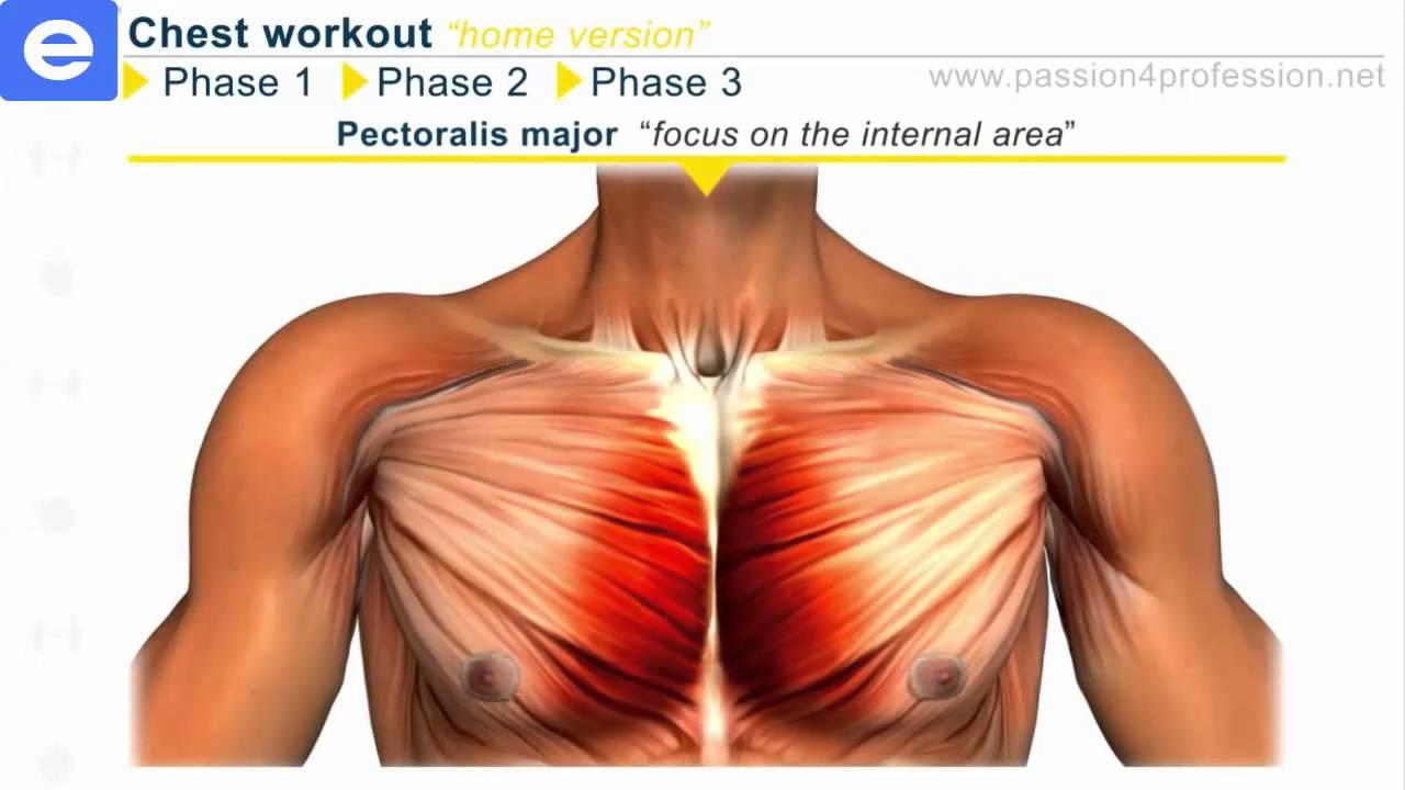 Bài tập ngực cơ bản tại nhà – chestworkouthome