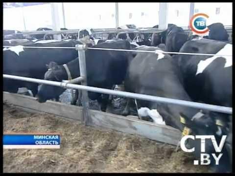 CTV.BY: Новости 24 часа 29 августа за 16.30