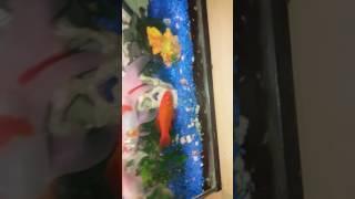 Nieuw aquarium