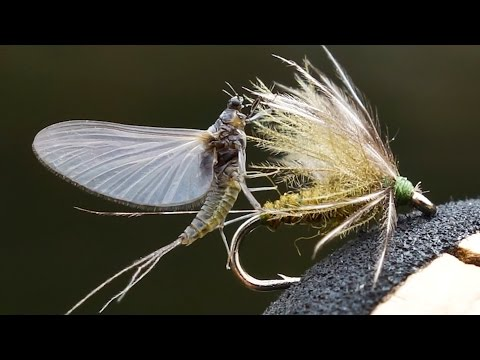 Dream Stream Tricos | Fly Fishing South Platte River Trico Hatch