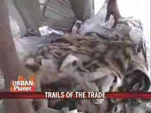 Trailing illegal animal trafficking