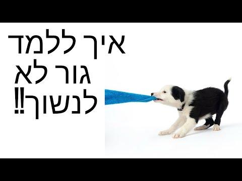 אילוף גורים - איך ללמד גור לא לנשוך? - טל שלוש מאלף כלבים בכיר