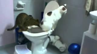 Кошка учит молодого кота какать в унитаз, супер ржачно!(Коты не только сами ходят какать в унитаз, но еще и учат этому подростающее поколение! Супер смешное видео!, 2014-05-09T19:39:59.000Z)